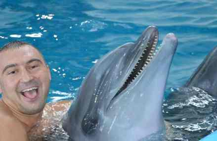 The dolphins used to treat PTSD in Ukrainian soldiers