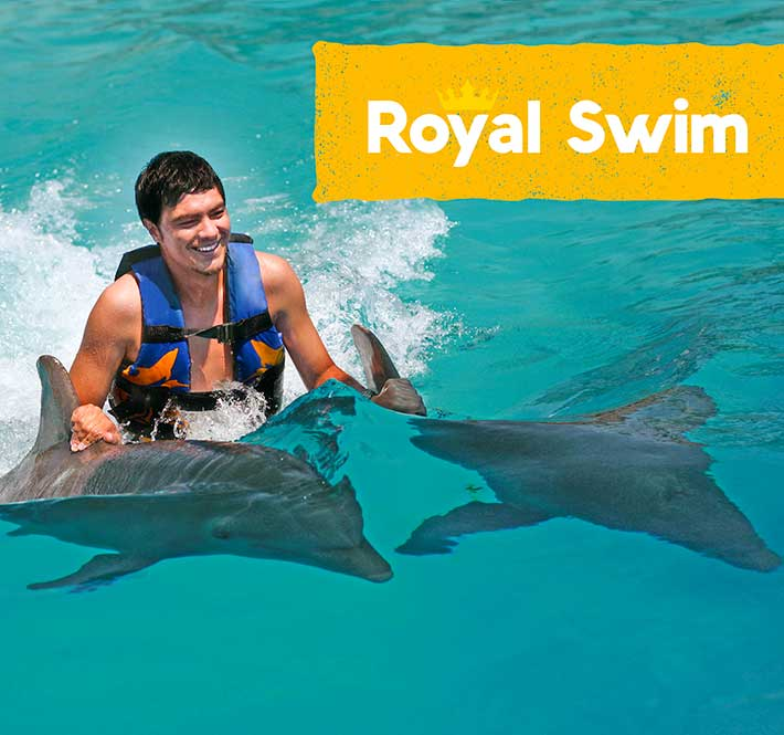 More than 10 species of dolphins live in the waters around new zealand. Swim With Dolphins In Dolphin Cove Cayman