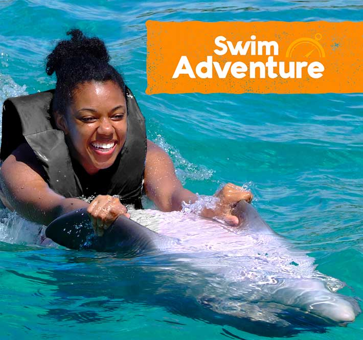 Dolphins generally give birth to just one baby at a time, which is referred to as a calf. Swim With Dolphins In Dolphin Cove Cayman