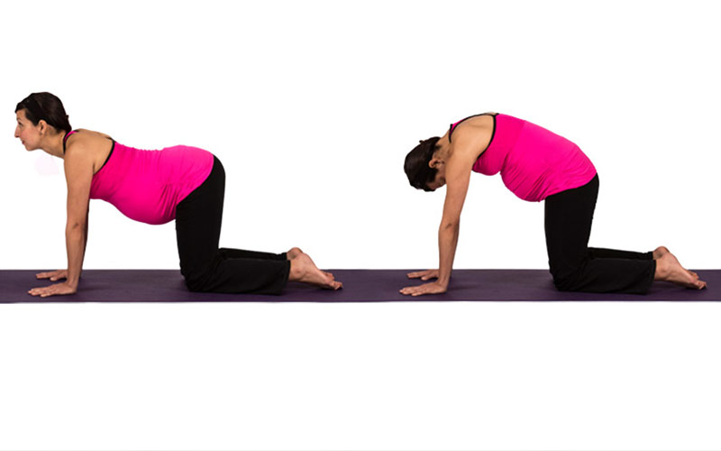Prenatal Yoga Cat Cow Pose