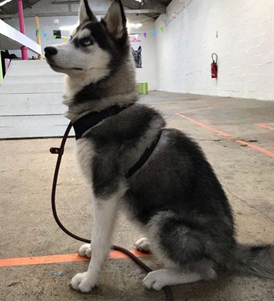 chien-assis-2