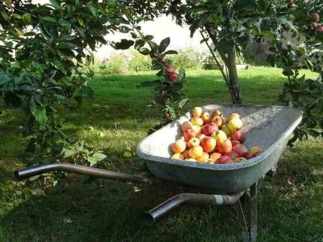 pommes pour jus
