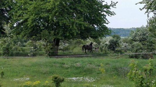 koně v Milovicích