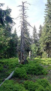 okolí vysílače Černá hora