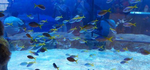 Dubai Aquarium 08