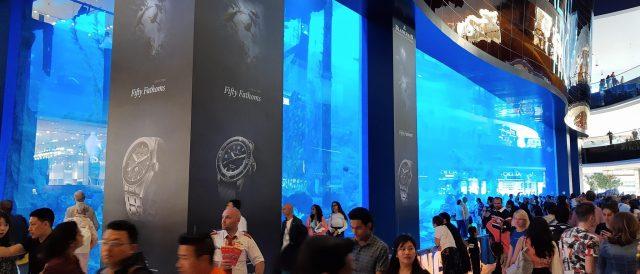 Dubai Aquarium 11
