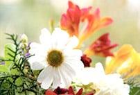 mantenimiento-de-jardines-domesticoalicante Servicios de jardinería por horas