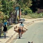 Haiti: a Few Lessons on Free Trade