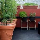 Urban Gardening – What You Need to Start