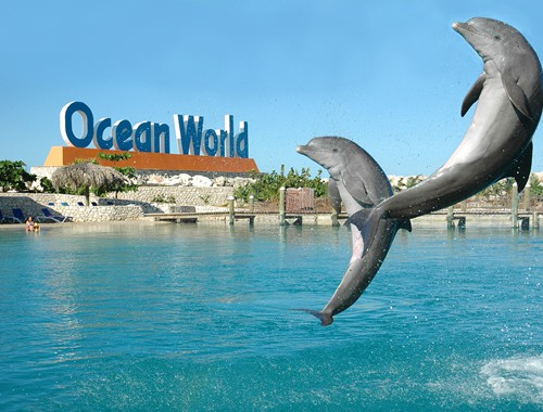 Ocean World Adventure Park, Marina & Casino