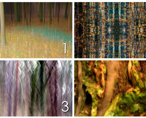 Pick your favourite Treedom photograph and read what's your call to Treedom