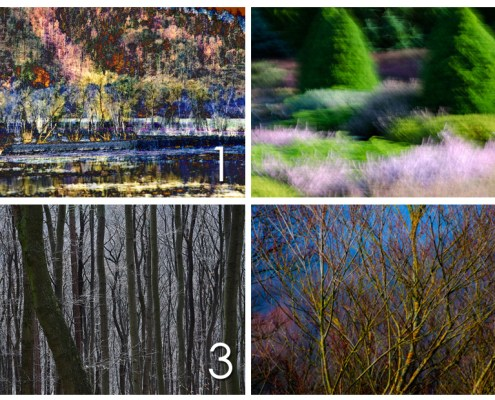 Pick a photo and learn how it can liberate your treedom of expression