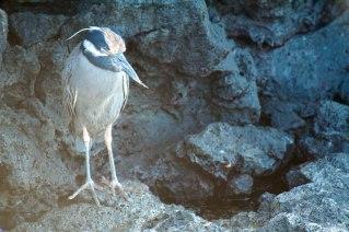 galapagos-domonthego-257