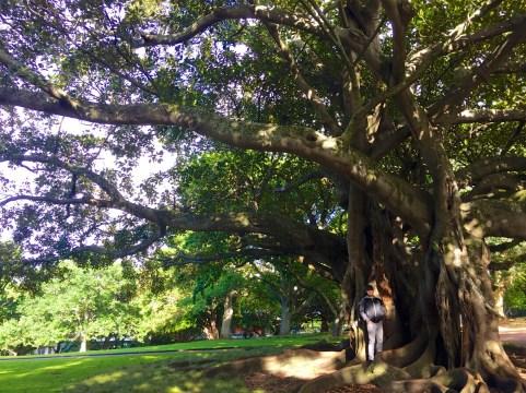 Auckland-NewZealand-DomOnTheGo 19