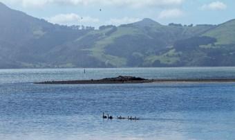 Dunedin-NewZealand-DomOnTheGo 27