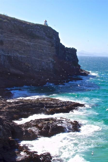 Dunedin-NewZealand-DomOnTheGo 34