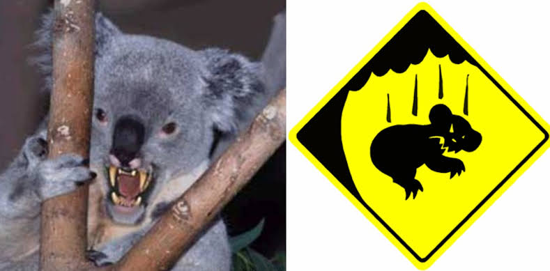 How To Survive The Australian Drop Bear - Do More Be More