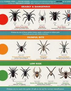 Ohio spiders chart paketsusudomba co also spider identification ibovnathandedecker rh