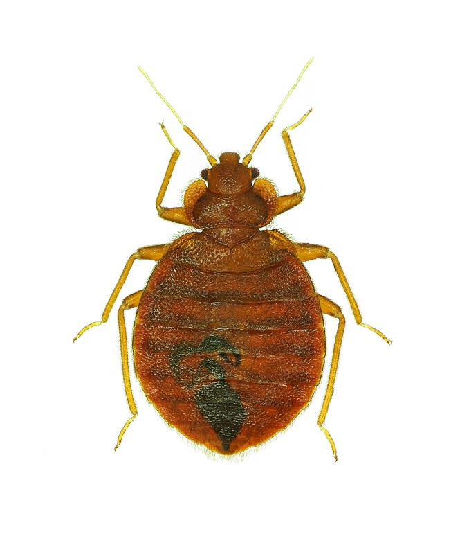 Do It Yourself Bed Bug Control