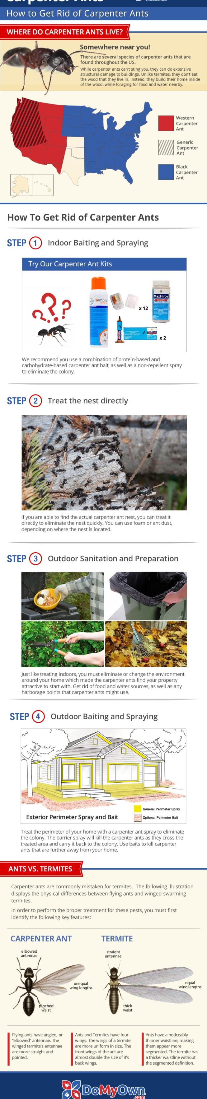 Carpenter Ant Treatment Infographic