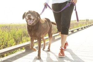 Woman walking a dog - greater physical activity