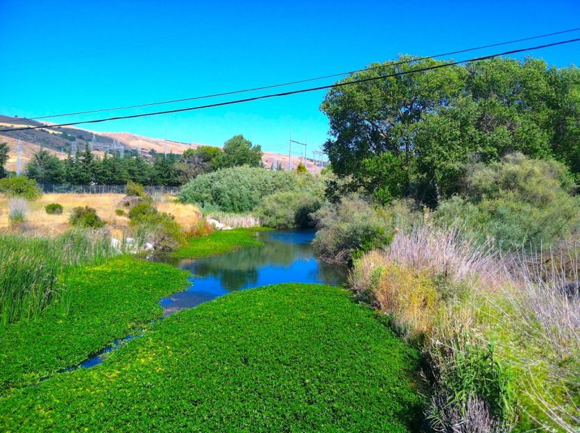Coyote Creek at the corner of Metcalf Road and Monterey Highway.