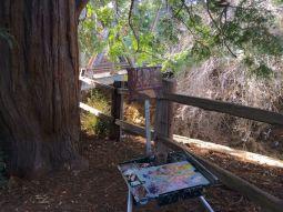 "My easel set under ""El Palo Alto"" historic redwood tree."