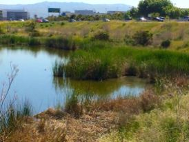 A wetland pond by Calabazas Creek which I used as part of the composition. Hwy 237 is in the background.