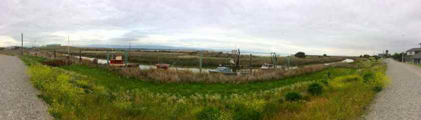 The old Port of San Jose (Alviso Marina) now silted in and choked with vegetation.