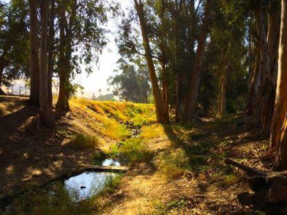 Along Mission Creek.