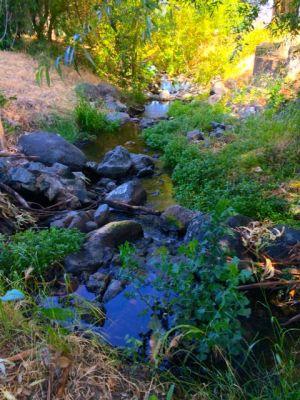 Mission Creek had a nice flow.