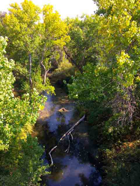 Here is Coyote Creek by Happy Hollow Park just before it flows under Story Rd and through The Jungle.