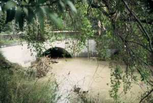 San Francisquito Creek near flood stage.