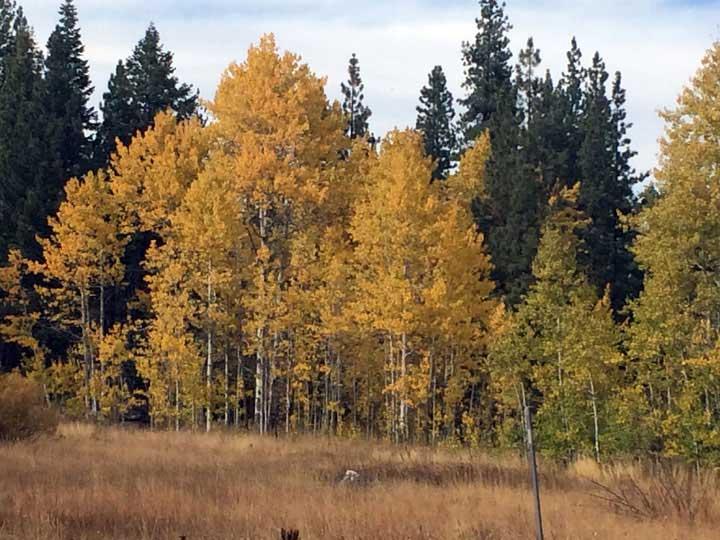 Upper Truckee Creek area