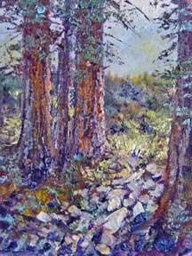 Redwoods, santa cruz