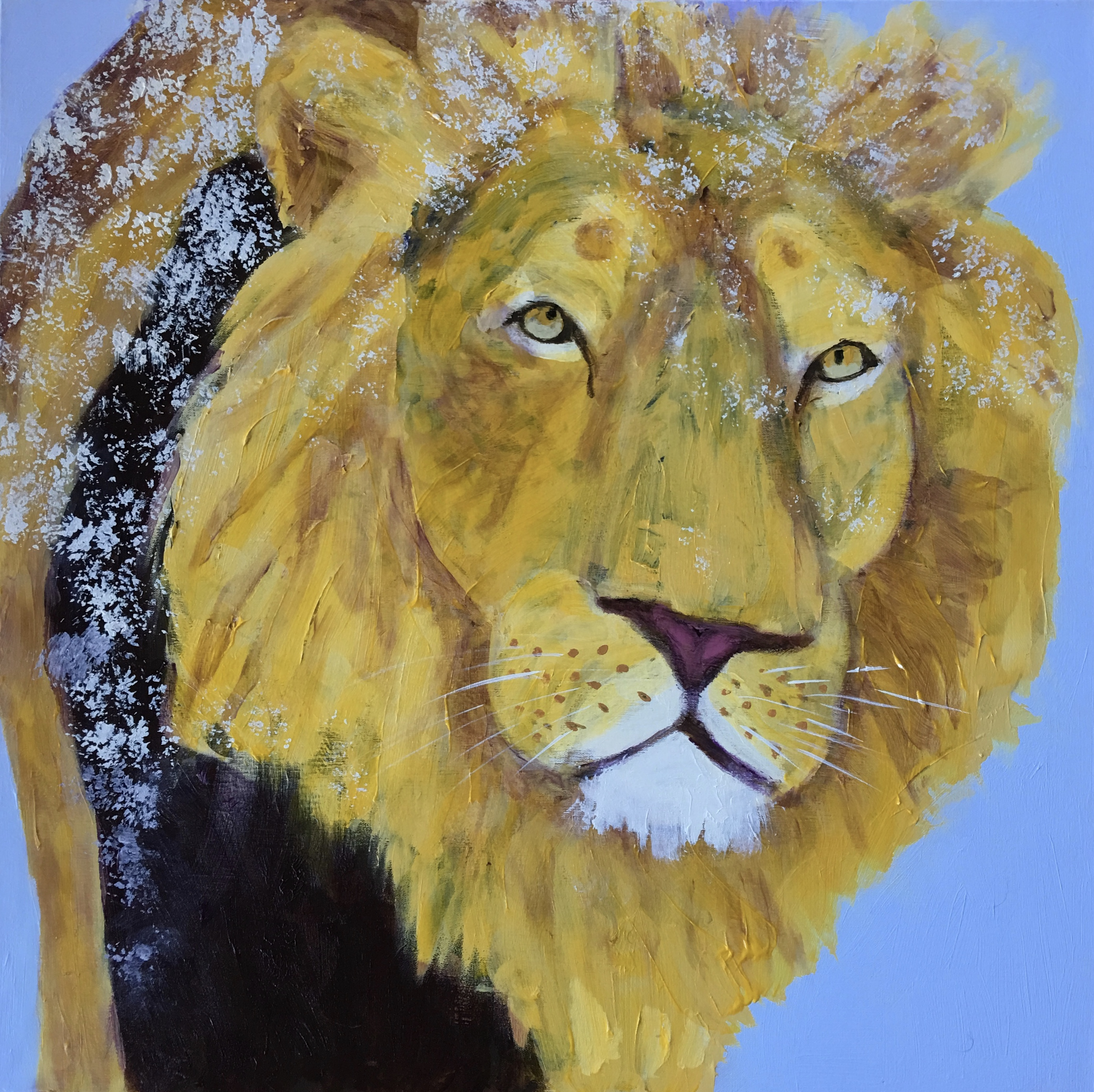 Prowling Lion - SOLD - Prints Available