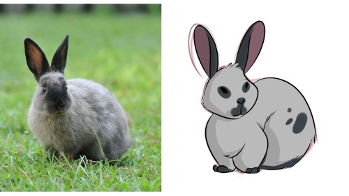 Master Drawing a Bunny and other Rodents in our Course