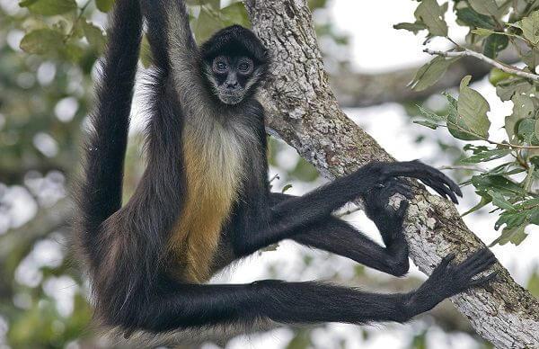 Como Hacer Monos Mano