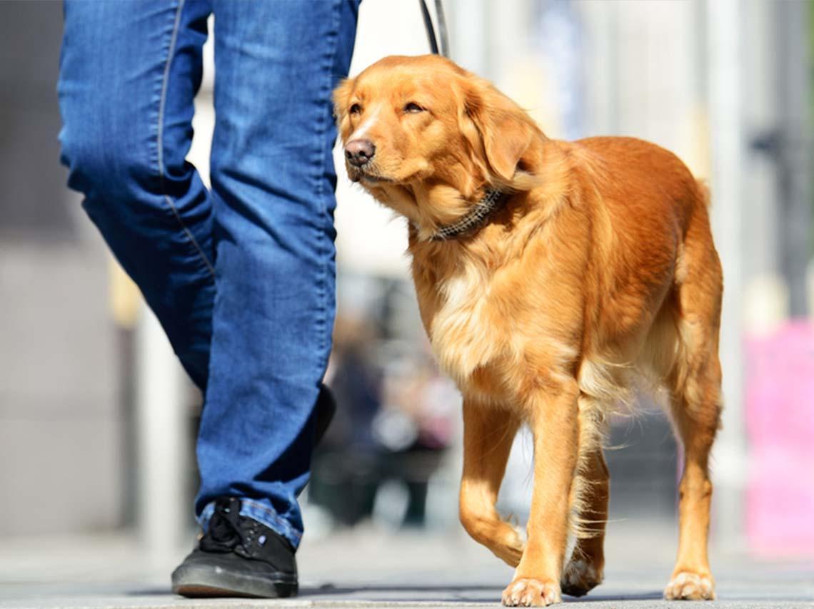lugares-para-vivir-con-perros