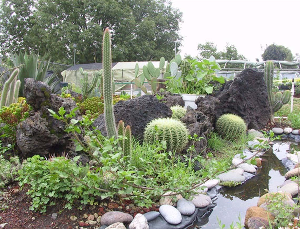 Jardines bot nicos en el df naturaleza pura en la ciudad for Jardines mexico