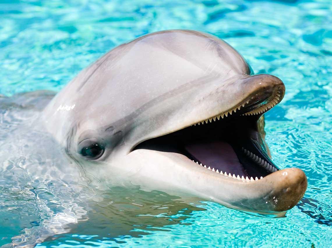 Lugares para nadar con delfines