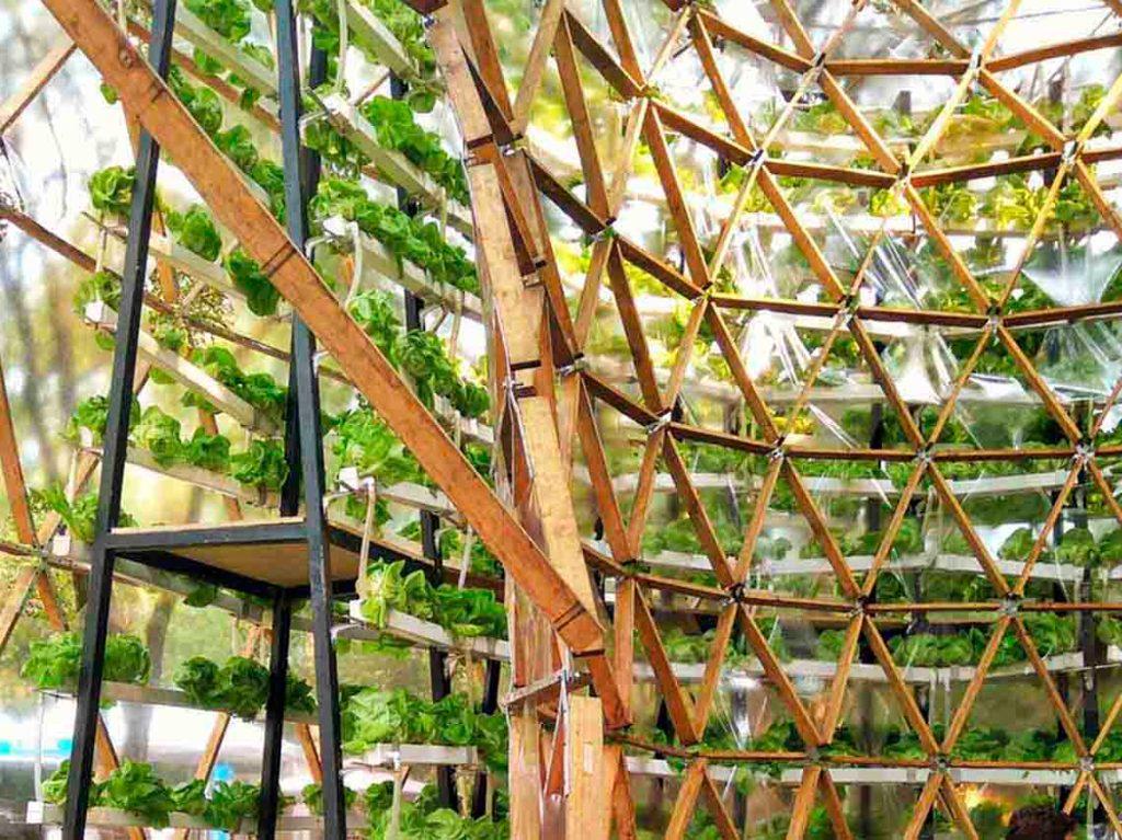 invernadero-hidroponico-gigante-en-jardin-botanico-01