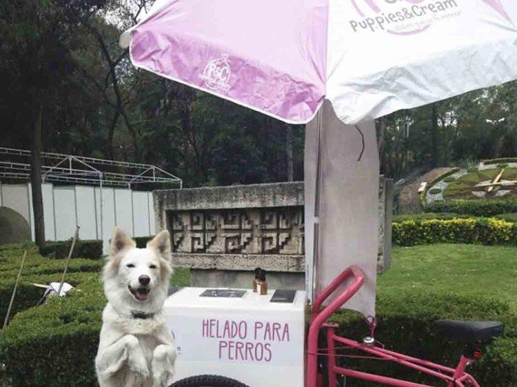 Helados para perros en México Puppies & Cream | Dónde Ir