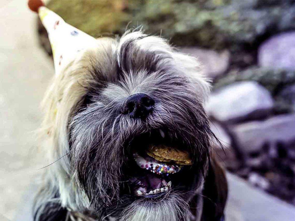 Celebralos con estas pastelerías para perros en CDMX