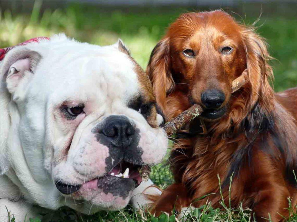 Diviertete en estos lugares para perros en CDMX