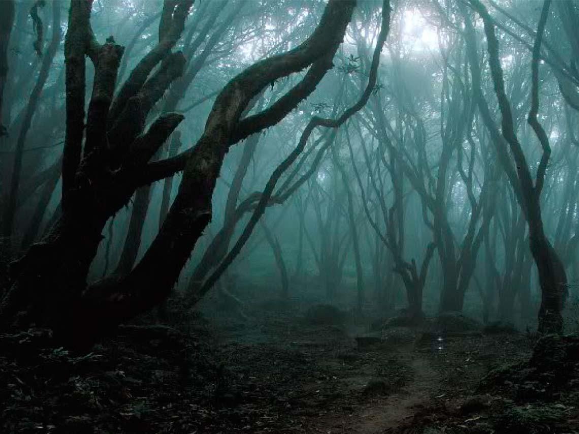 Rodada de terror nocturna en el bosque del Ajusco