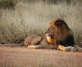 Safari fotográfico en Sudáfrica: vida salvaje