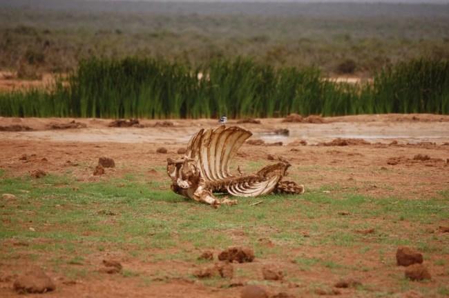 Cadaver en Sudáfrica