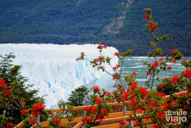 Pasarelas del Glaciar Perito Moreno