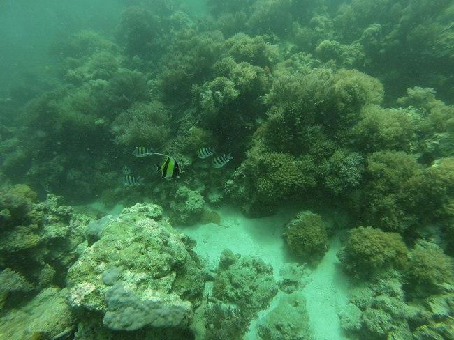 Buceo en Mnemba Island